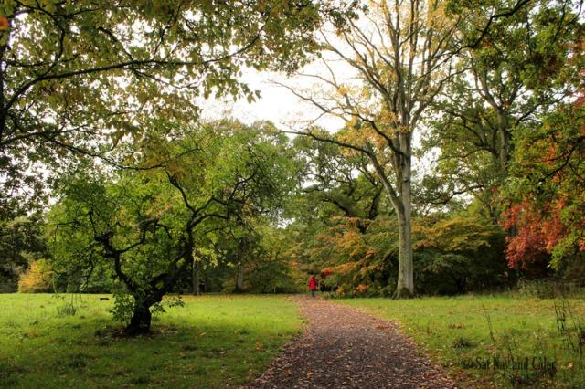 Path at Westonbirt Arboretum, Tetbury, UK
