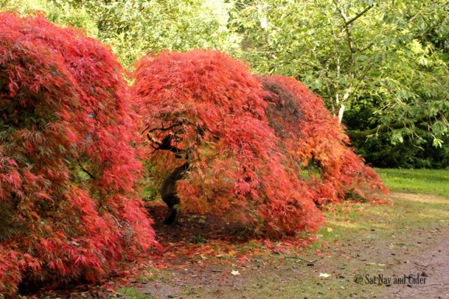 Colors at Westonbirt Arboretum, Tetbury, UK